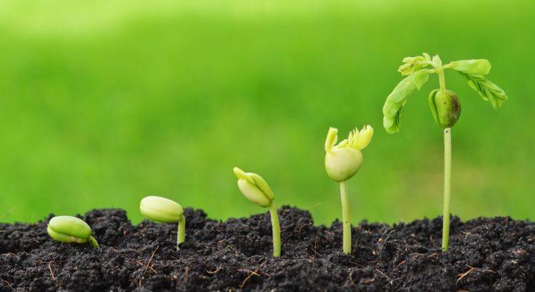 биостимуляторы для роста растений
