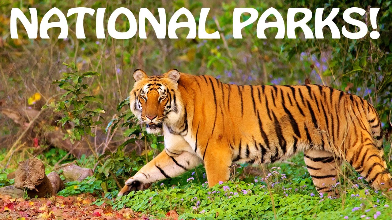 Indian National Park || List of National Park of India 2019-2020